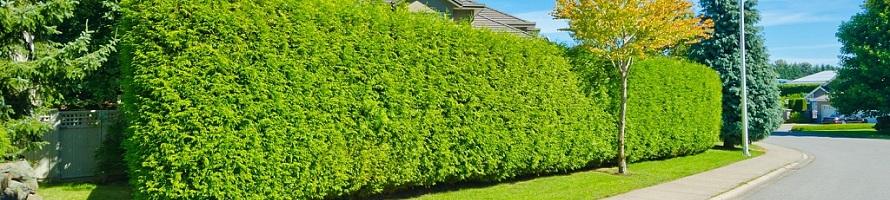 искусственный зеленый забор цена
